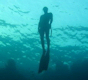 Remote Underwater Shutter Release - last post by .Greg