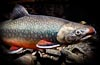 Good lens for fish portraits FF - last post by Tom_Kline