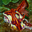 Unusual nudibranch species - last post by Graham Abbott