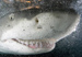 Shark fin awareness in China - last post by bmyates