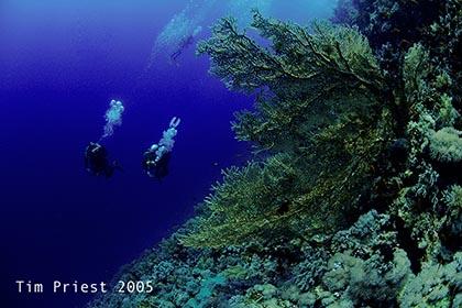 2005_44_Red_Sea.jpg