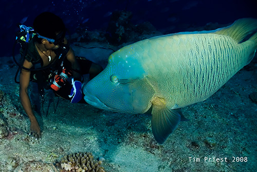 2008_Palau_092_Blue_Corner_18_70mm.jpg