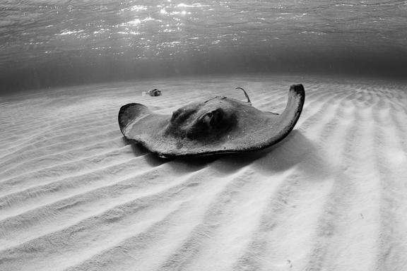 Cayman_rays_1.jpg