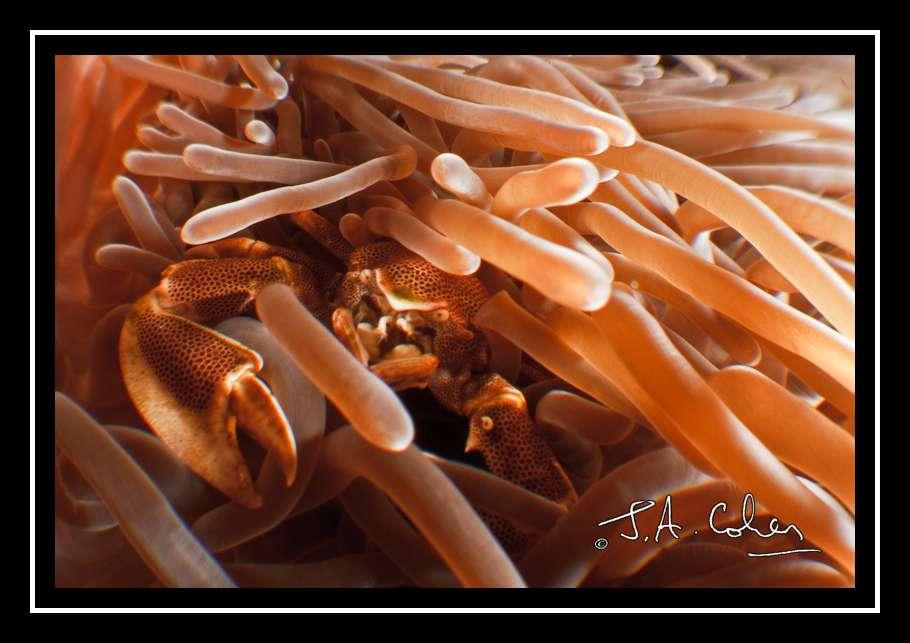 2010_1_Phuket_388.jpg