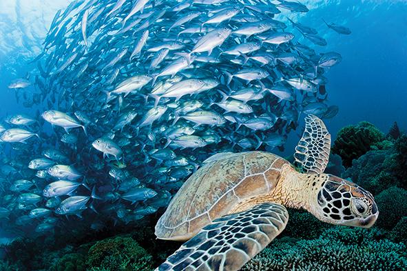 Turtle-Jacks.jpg
