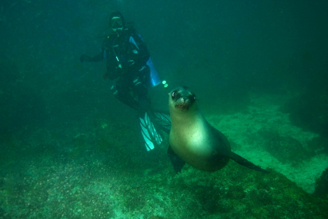Sea Lion and Diver - Web.jpg
