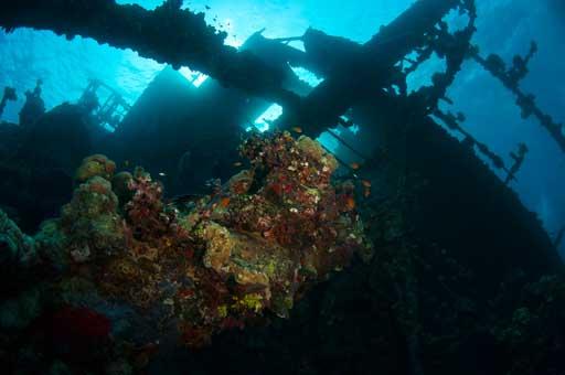 Sudan 2011 018 062 Umbria Wingate Reef.jpg