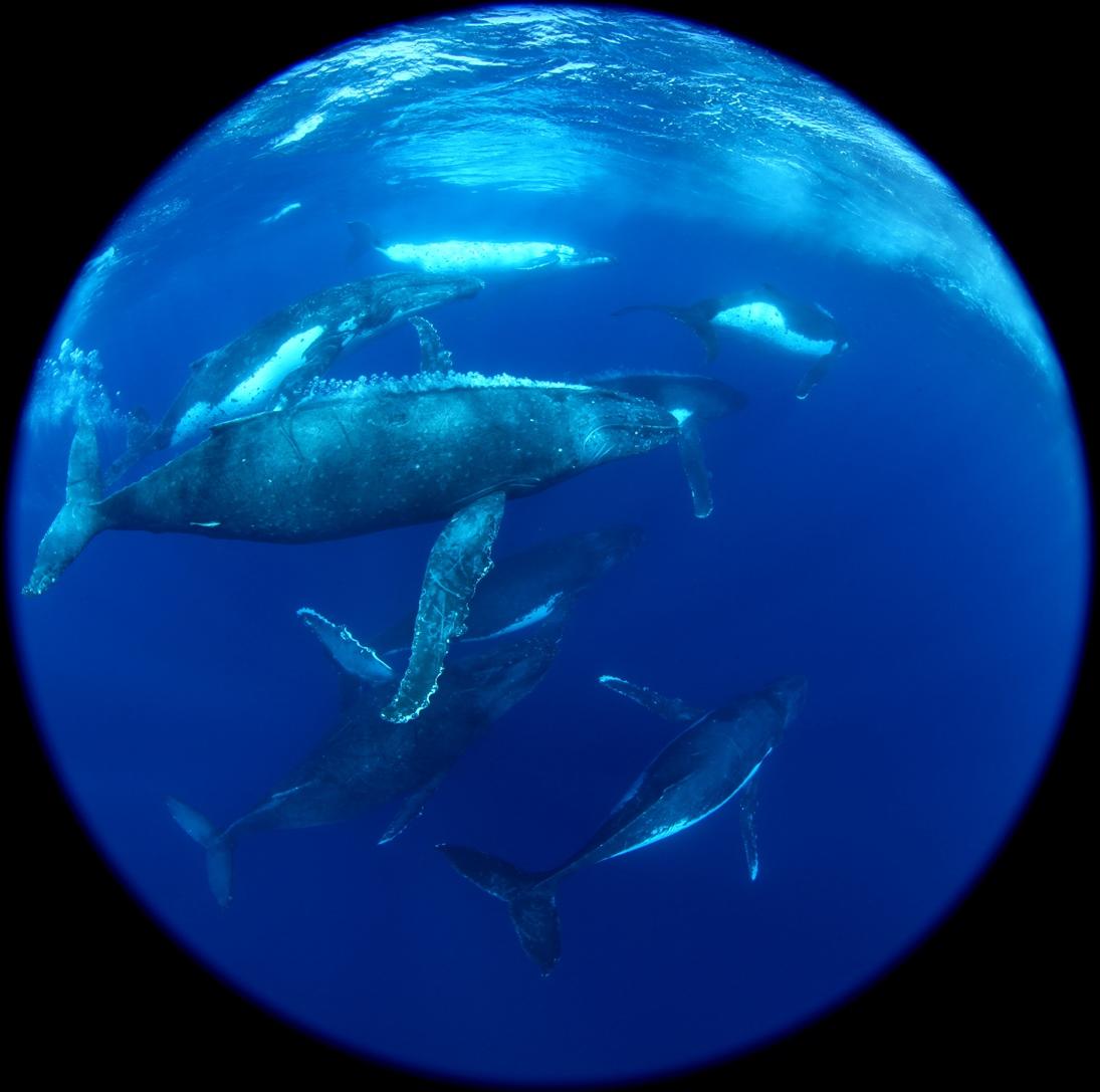 Whales-s.jpg