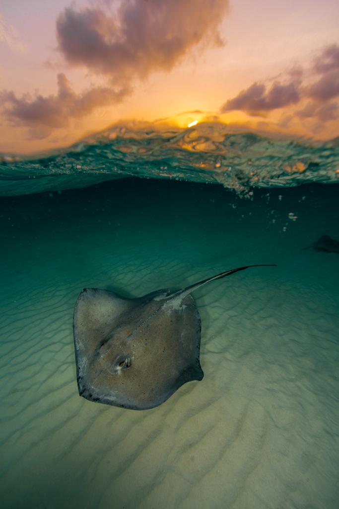 Grand Cayman-7962.jpg