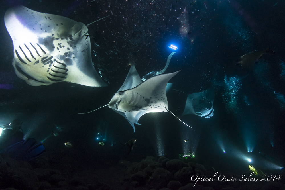 Reef Mantas-4.jpg