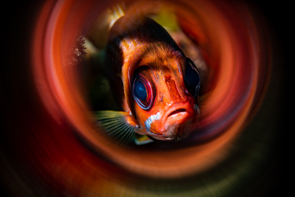 Longjaw Squirrelfish.jpg