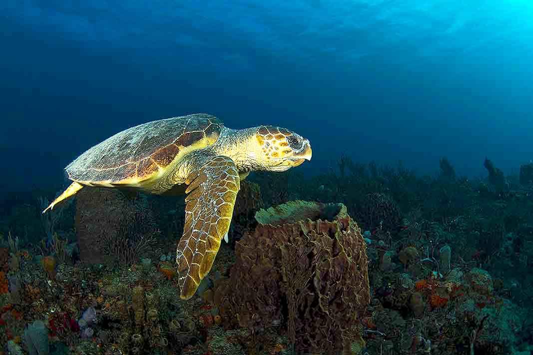 Nauticam7d_turtle.jpg