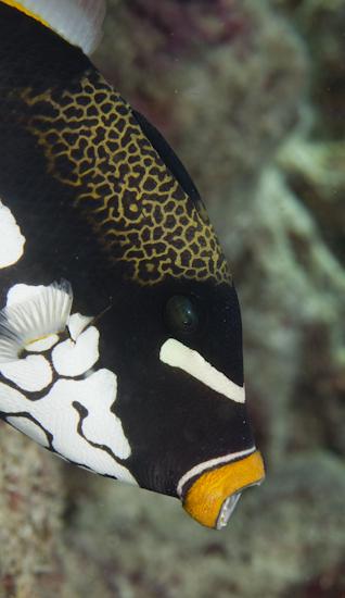 Frink_Maldives_3204.jpg