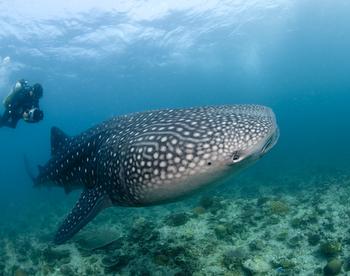 Frink_Maldives_0719.JPG