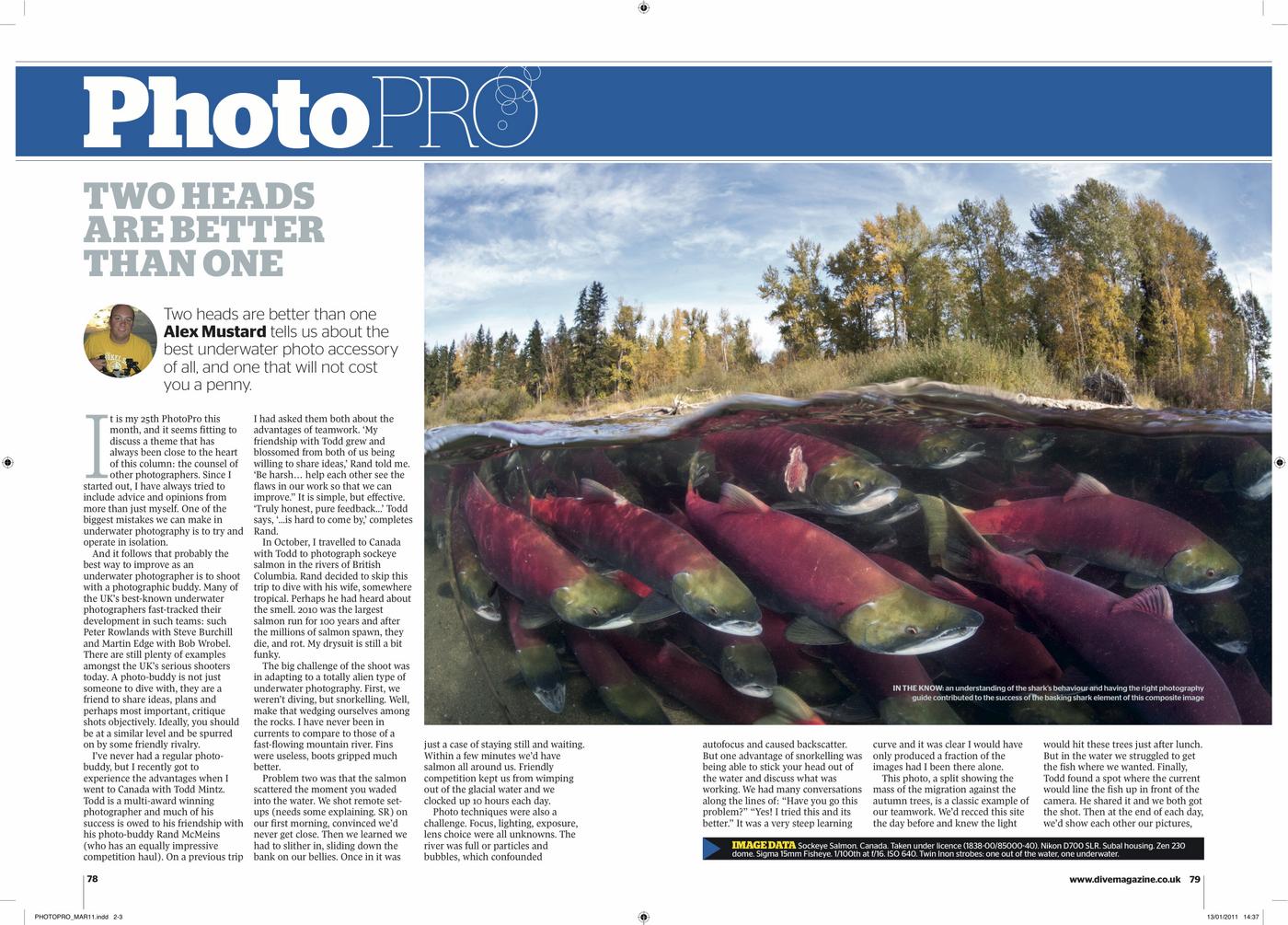 Mustard_story_re_salmon.jpg