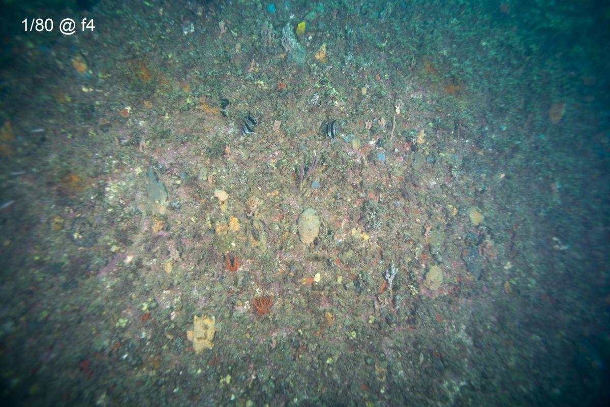 Glenelg Barge 01 f4.JPG