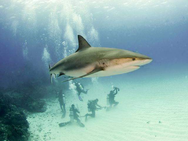 carr sharks.jpg