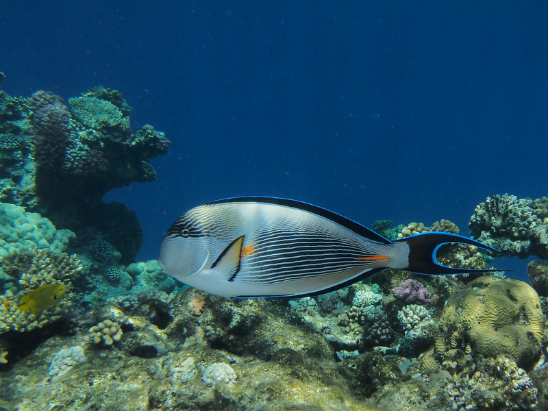 Perfect destination with good underwater conditions for Good beginner fish