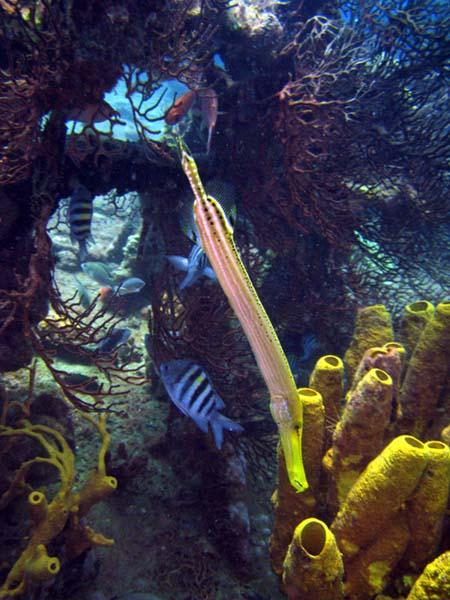pipefishonwreck.jpg