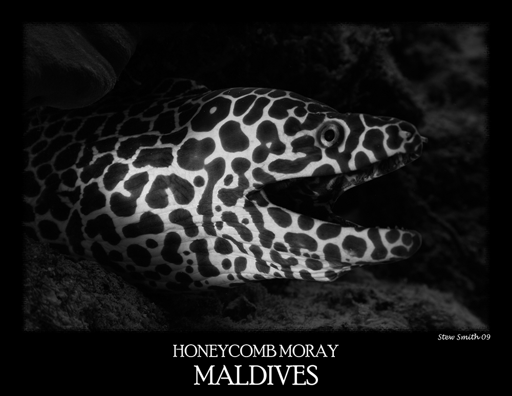 honeycomb_moray.jpg