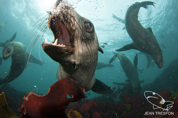 Seals_21.jpg