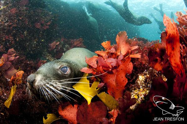 Seals_09.jpg