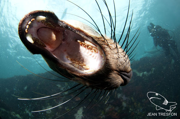 Seals_10.jpg