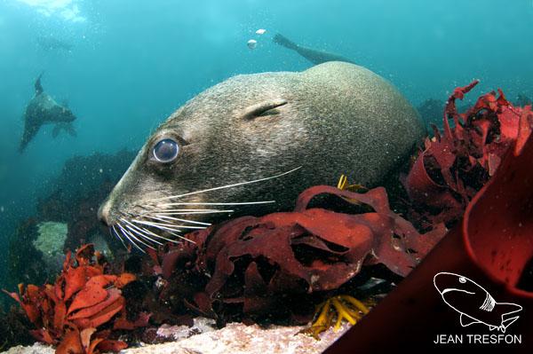 Seals_11.jpg