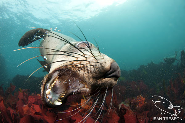 Seals_17.jpg