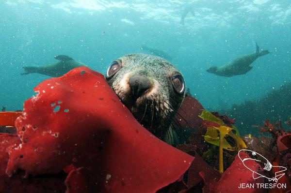 Seals_15.jpg