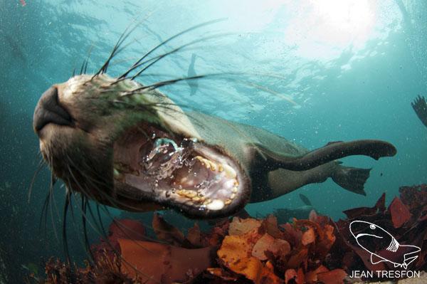 Seals_18.jpg