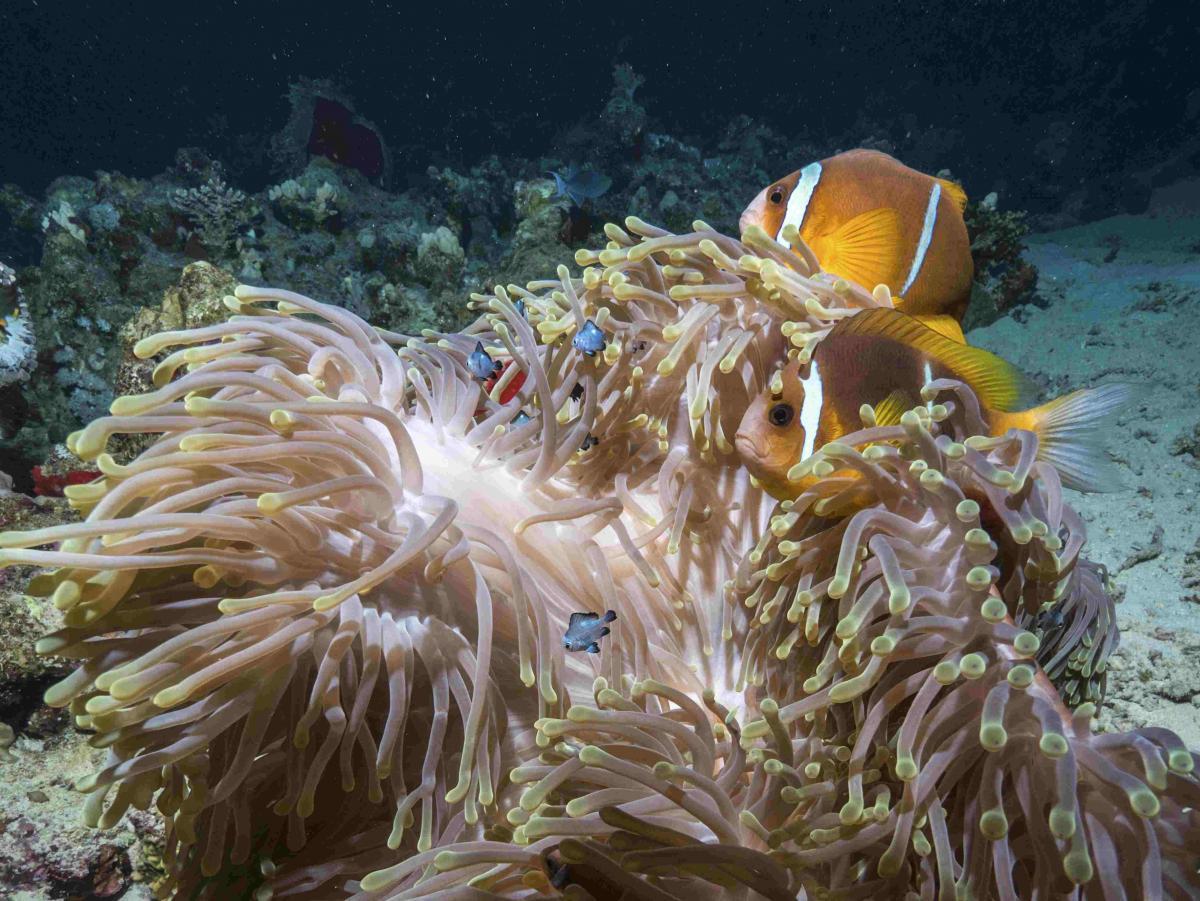 Clownfish_3.jpg