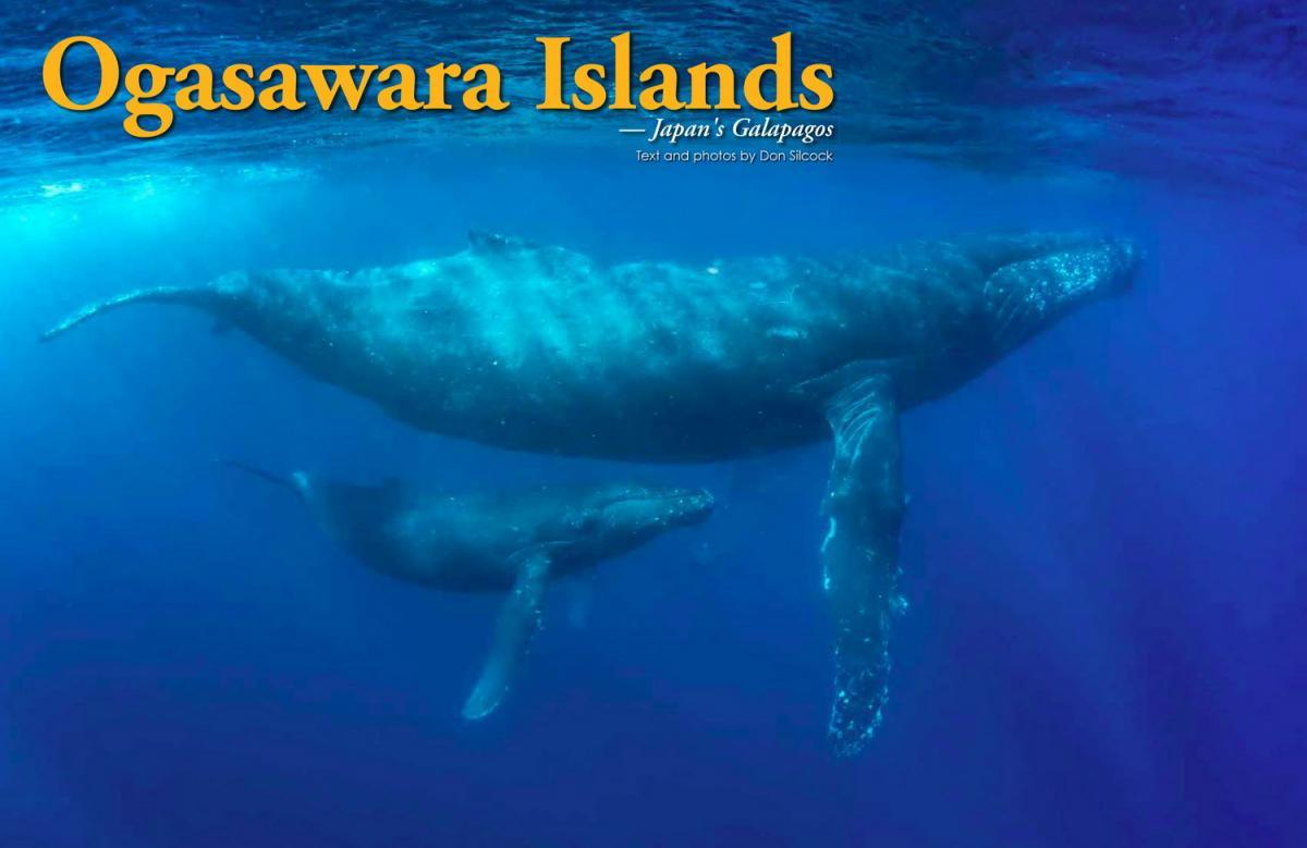 XR90_Ogasawara Islands_Cover_1500.jpg