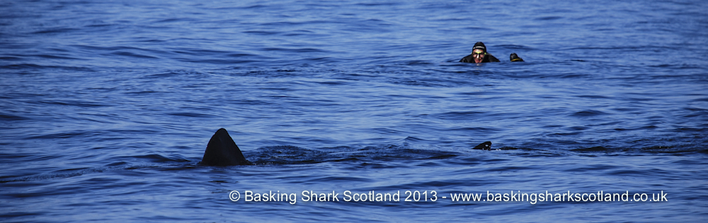 Swim With Basking Sharks.jpg