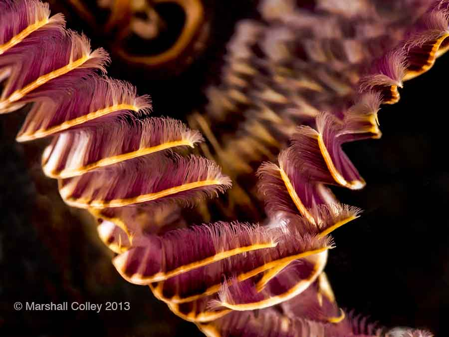 Worm Spiral 1-F copyright-Small.jpg