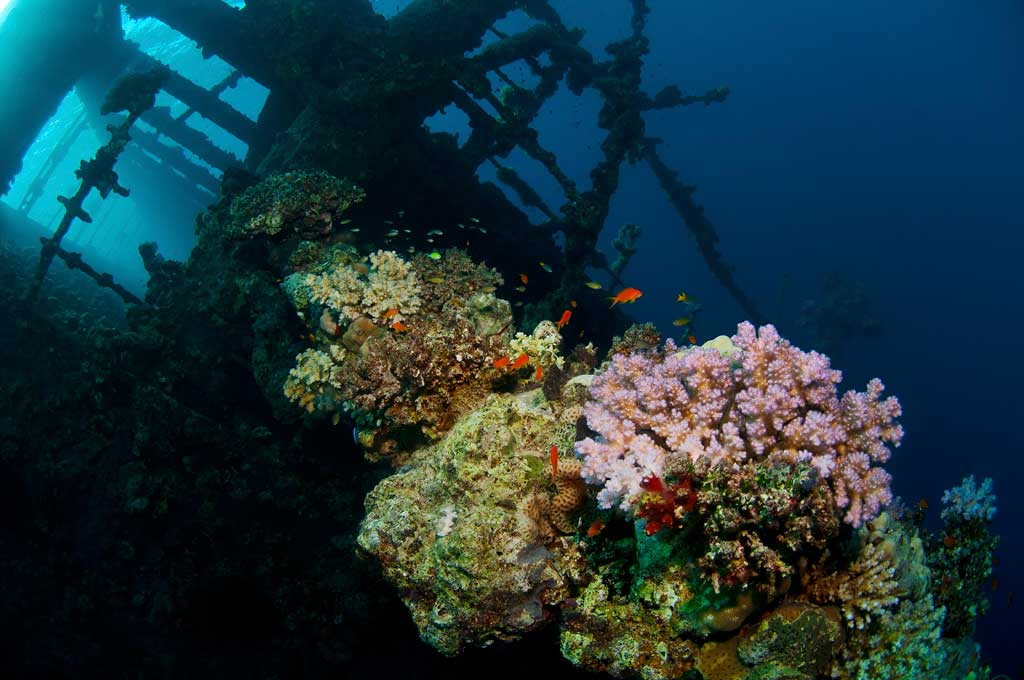 Sudan_2011_019_069_Umbria_Wingate_Reef.jpg