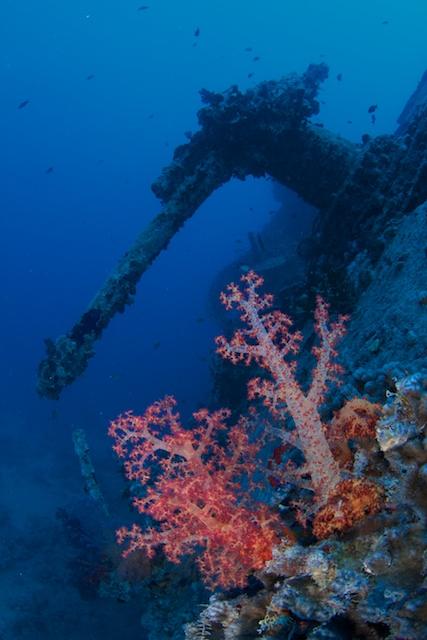 Red_Sea_0511__20464.jpg
