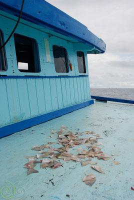 SharkFinsBlueDeckWeb.jpg