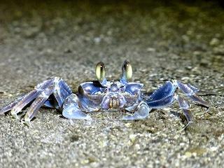 Crab V2.jpg
