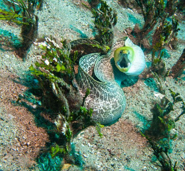 Diving-20120626-1142.jpg
