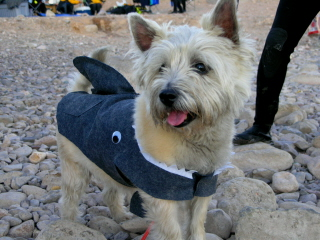 SCARY_SCUBA_CARVE_2006__HARLEY_S_DOGGIE_COSTUME_THE_SHARK_webshot_1.jpg