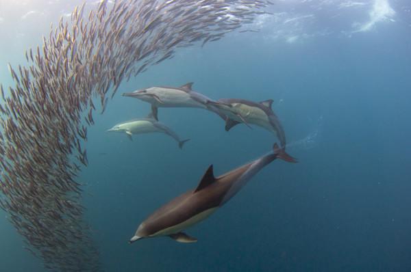 Sardines__2_.jpg
