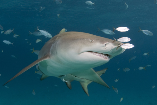 Sharks23.jpg