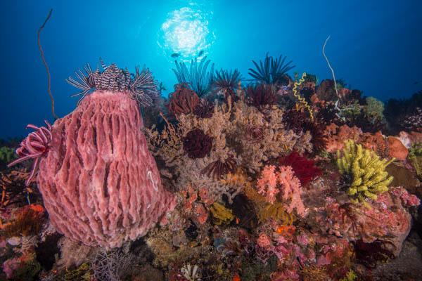 Sponge, crinoids & sun.jpg