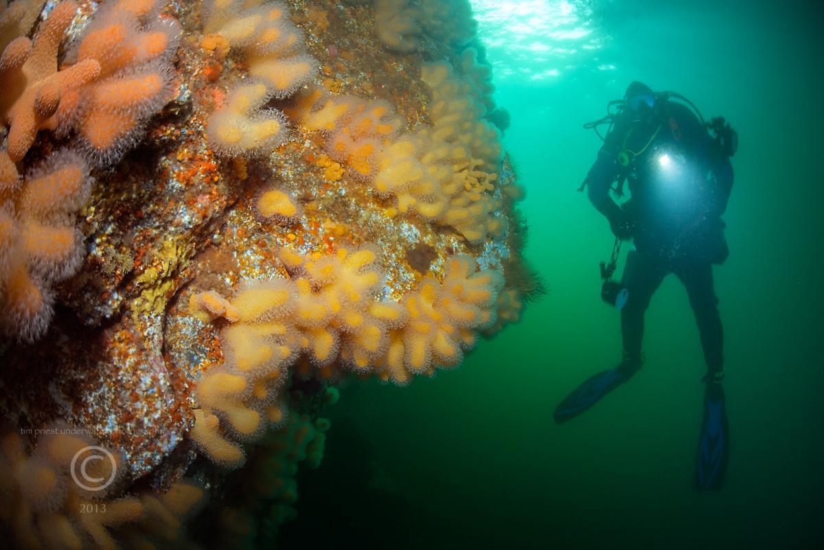 2013 Shetland 089 334 Bressay cave %22Goose%22.jpg