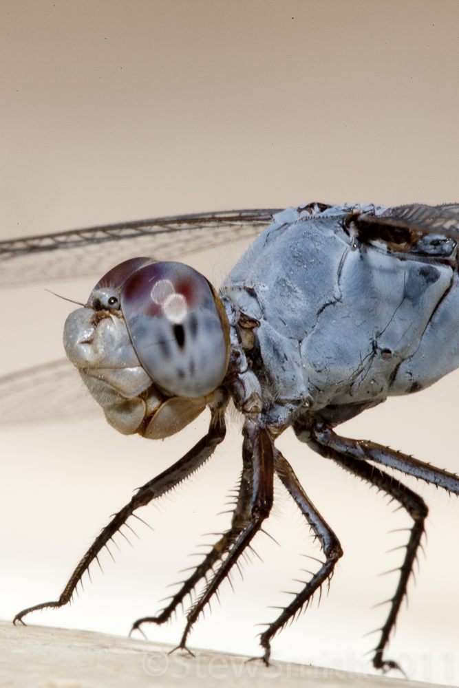 dragonfly1_7.jpg