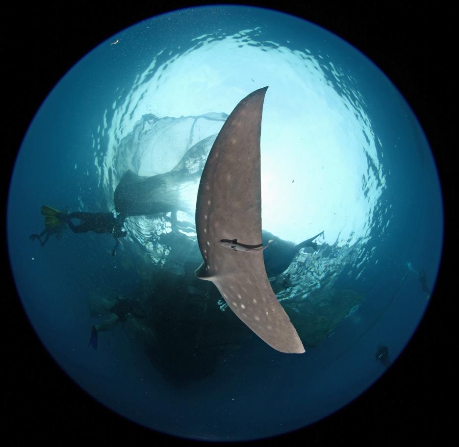 Whaleshark-10.jpg