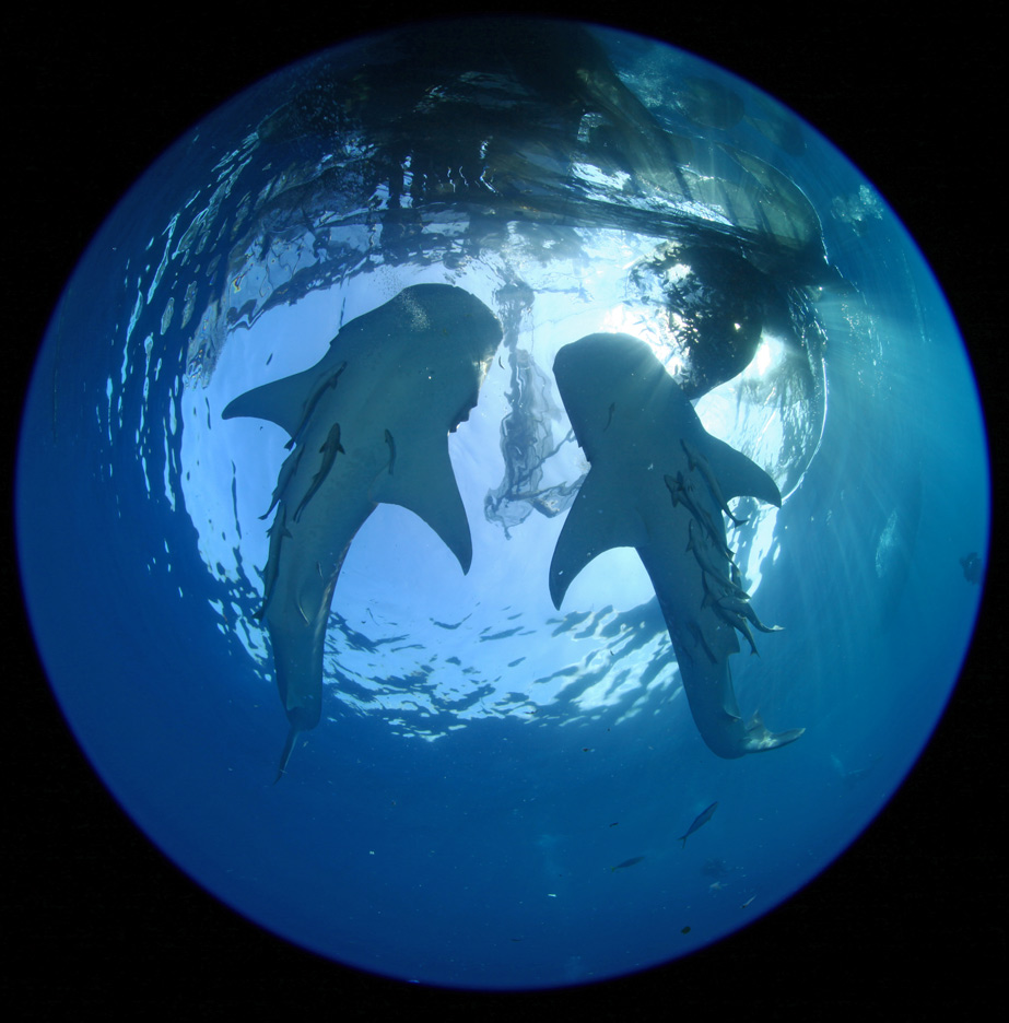Whaleshark-12.jpg