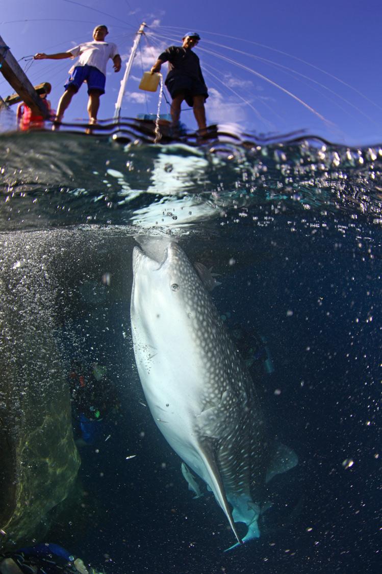 Whale-Shark-19.jpg