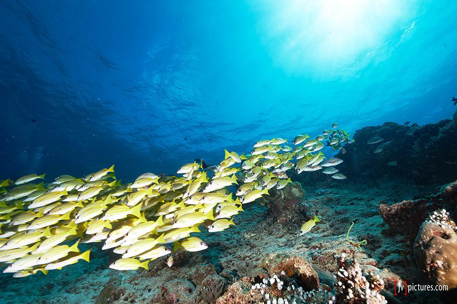 1308-Malediven-0035.jpg